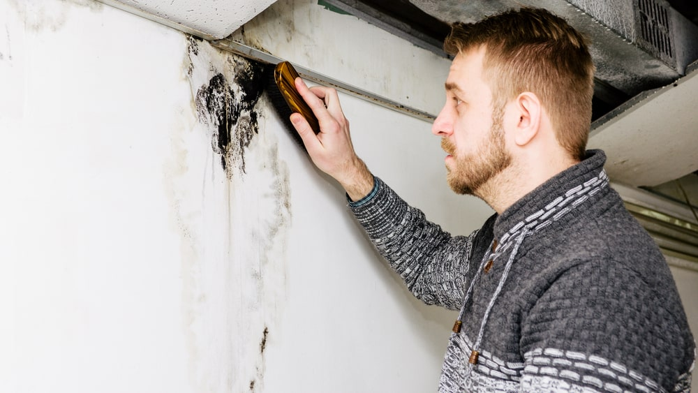 man removes black mold on basement wall