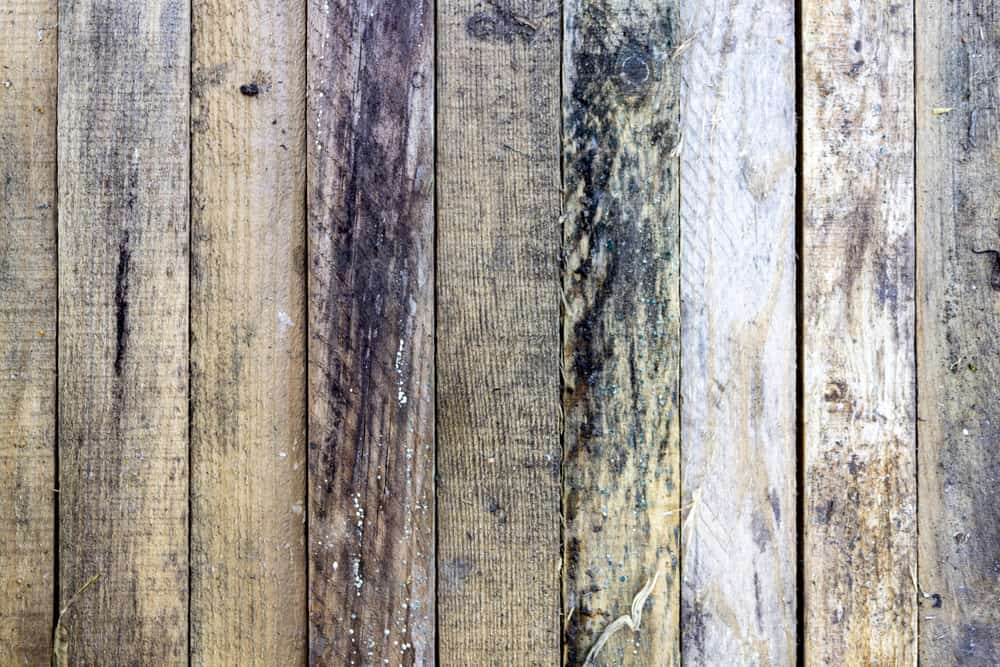 moldy wooden wall