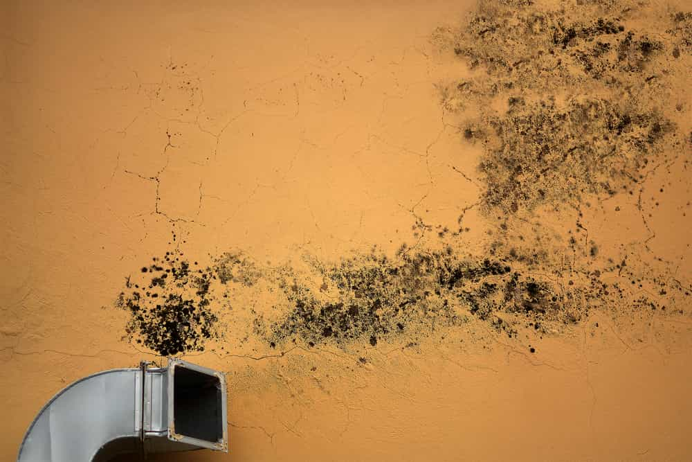 signs of mold in hvac
